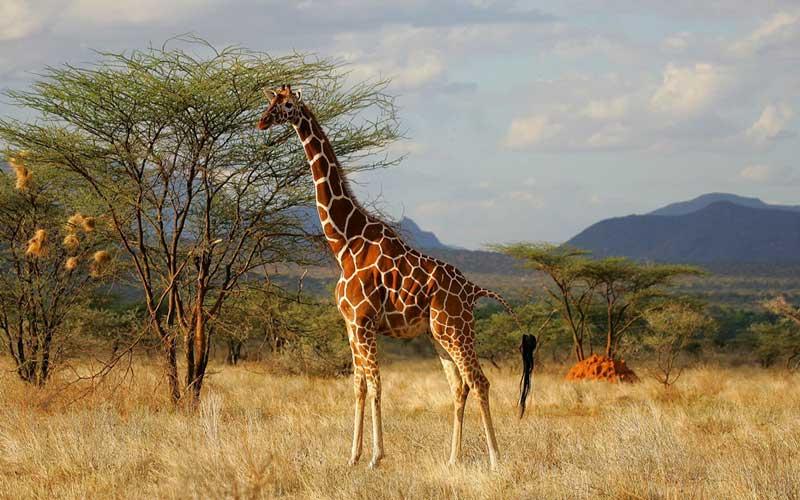 4 Kenya 2