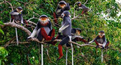 Khu bảo tồn thiên nhiên và động vận bán hoang dã